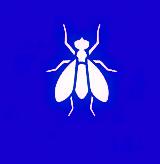 Сколько стоит уничтожение мух в Ростове