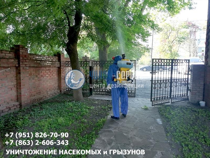 """Борьба с гусеницами специалистами центра дезинфекции """"Чикой-Сервис"""""""