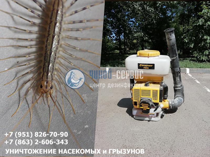 Как уничтожить сороконожек в Ростовской области