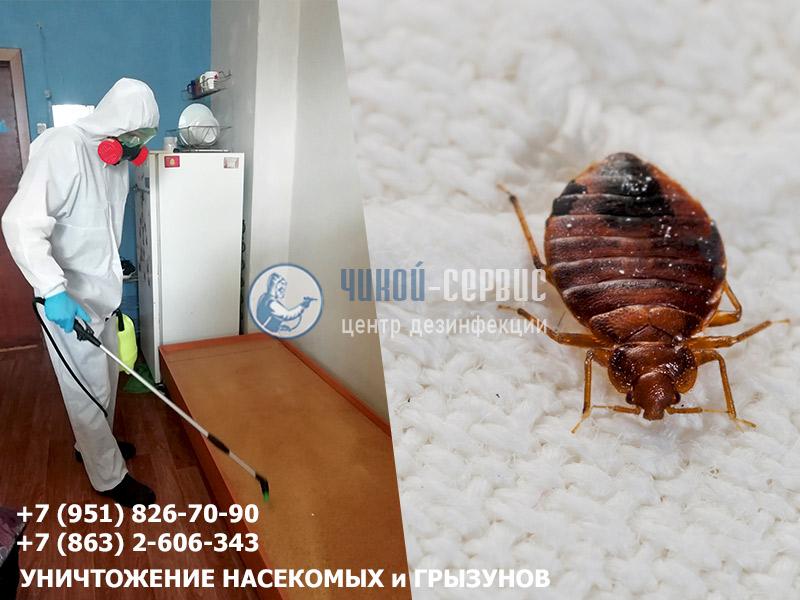 Избавиться от комнатных клещей