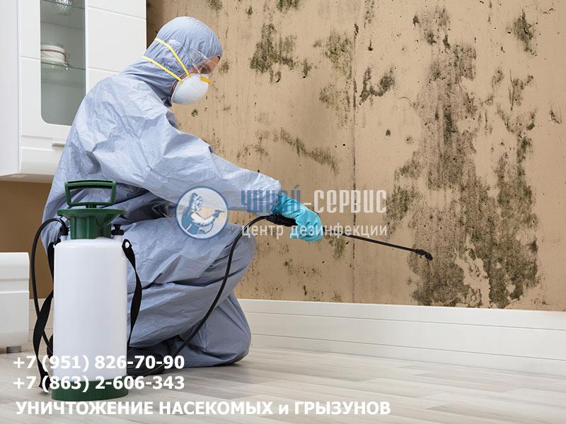 Профессиональное удаление плесени в Ростове от Чикой-Сервис
