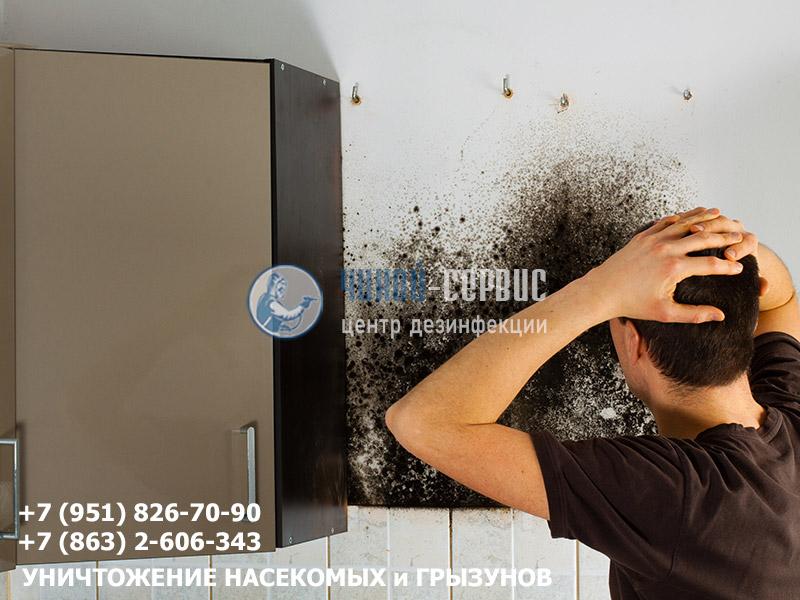 Обработка квартиры от плесени и грибками центром дезинфекции Чикой-Сервис