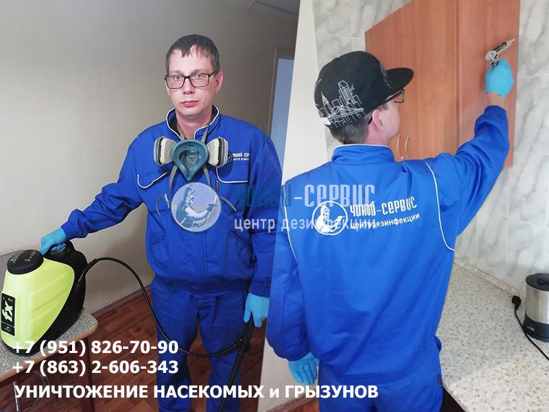 Профессиональное уничтожение тараканов в Ростове-на-Дону и Ростовской области