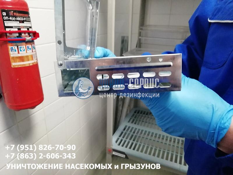 Организация дератизации в Ростове и области