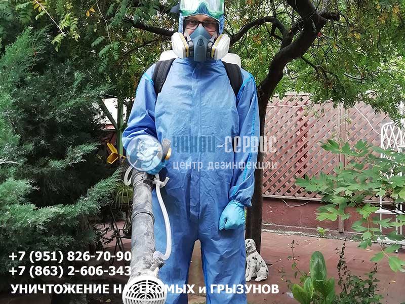 Профессиональная обработка хвойных от вредителей и болезней от Чикой-Сервис